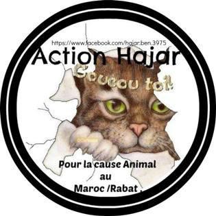 Un autocollant vendu au profil de « l'action Hajar » la vente servira à la stérilisation des chats des rues de Rabat.
