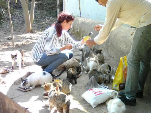 """Action Hajar """"Stérilisation des chats de rues de Rabat/Maroc"""""""