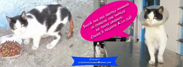 Cher Amis, Deux choses qui me tien a c½ur a Rabat/Maroc - Action Hajar :