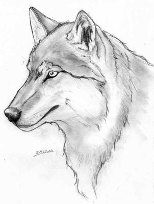 Loup en dessin rastaman - Dessin loup facile ...