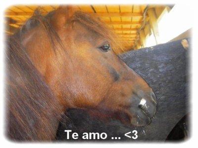 < Votre cheval, vous ressemble comme votre reflet dans un miroir. ♥