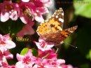 Photo de Look-my-photoW