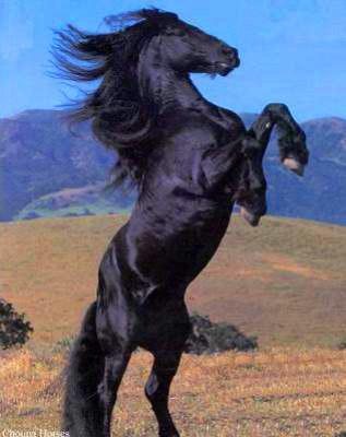 photo cheval cabre