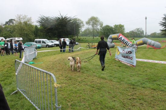 Manifestation Canine : Passion Chiens Nordiques à Crouay.