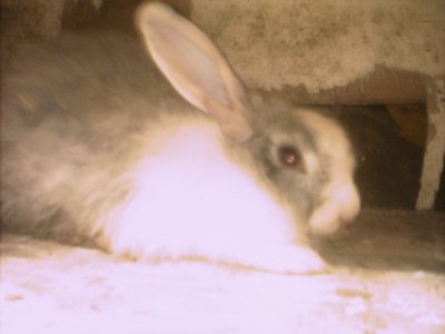 ma lapine