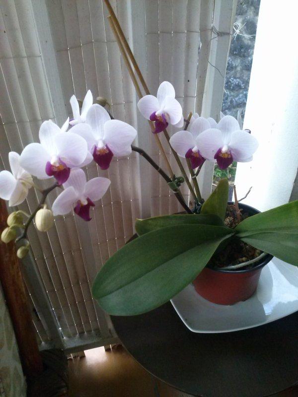 des orchidées pour montrer les merveilles que DIEU a crée pour nous les hommes
