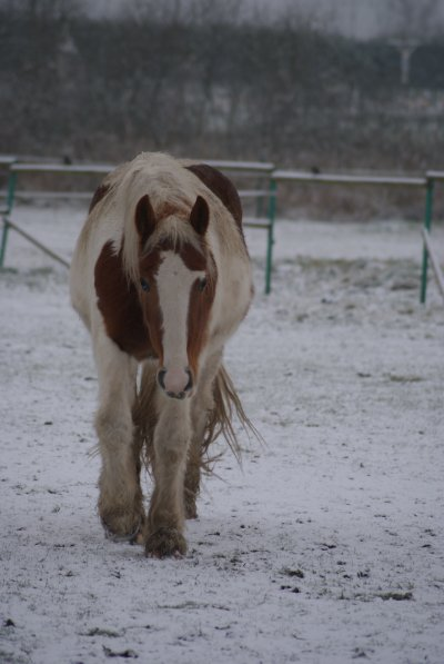 Domino sous la neige