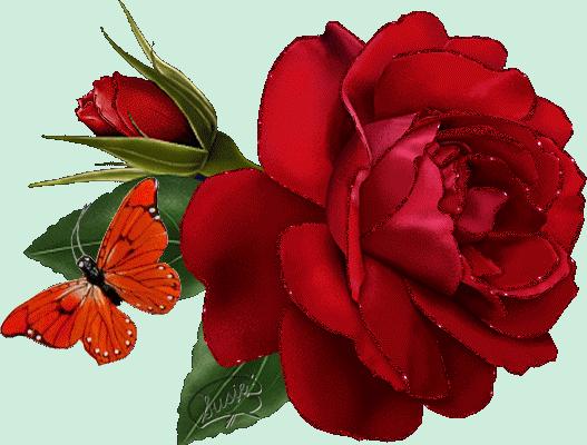 j'adore les roses