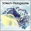 Photo de Schleich-Photographie