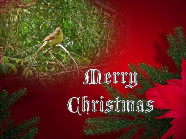 merry christmas card |merry christmas ornaments | merry christmas photo |