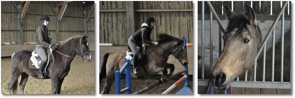 """""""Monter à cheval transforme le « je voudrais bien » en « je peux »""""  Pam Brown"""