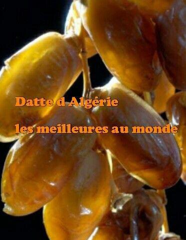 DEGLET NOOR  de Biskra en algerie