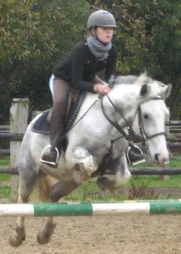 { ~ Loving Horses }