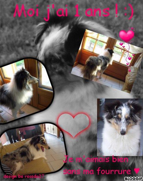 18/03/103 naissance de ma chienne , mon bonheur  ♥