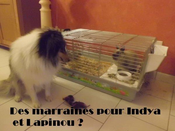 Des marraines pour Indya et Lapinou ♥