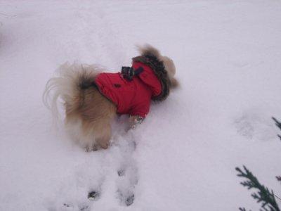 21 Décembre dans la neige  ---> jardin de papy                            (l) (l) (l) ETHAN (l) (l) (l)