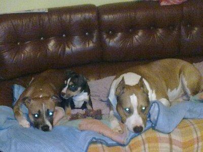Aalyah, Mimi et Yolly
