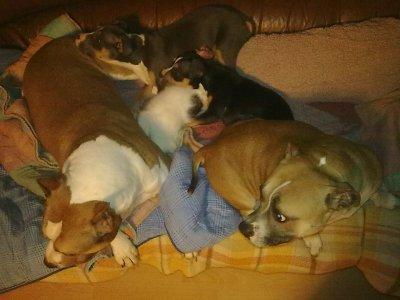 Un gros yolly    ;-)    avec Aalyah, Jack, Mimi et minou