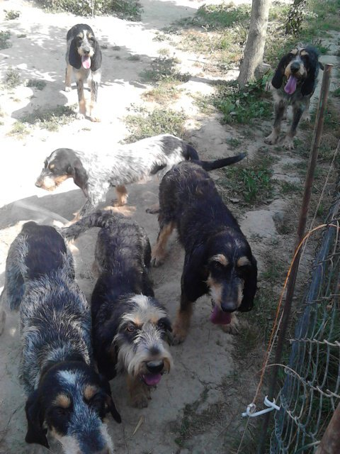 Mes 6 chiens