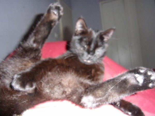 Ma chatte    que j'ai depuis 5 ans bientot