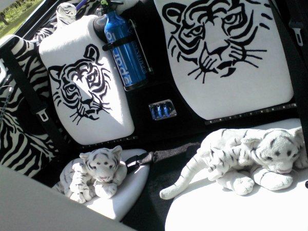 ma tigra avec des nouvelles photos