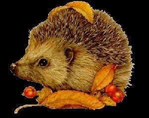 Bon mardi a tous..bel automne