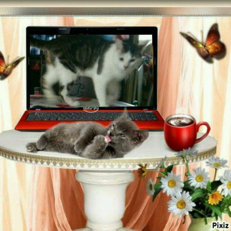 Bonne semaine a tous en compagnie de Miky mon chat