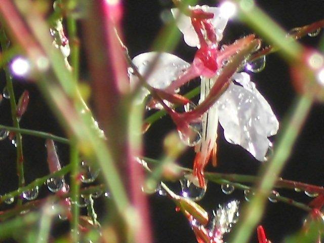 Automne 2012 : Après la pluie vient le beau temps.