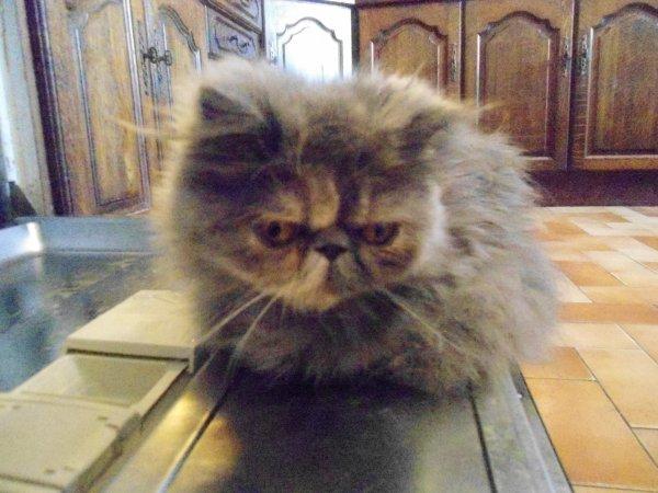 Mes Deux amour de petit chat...♥