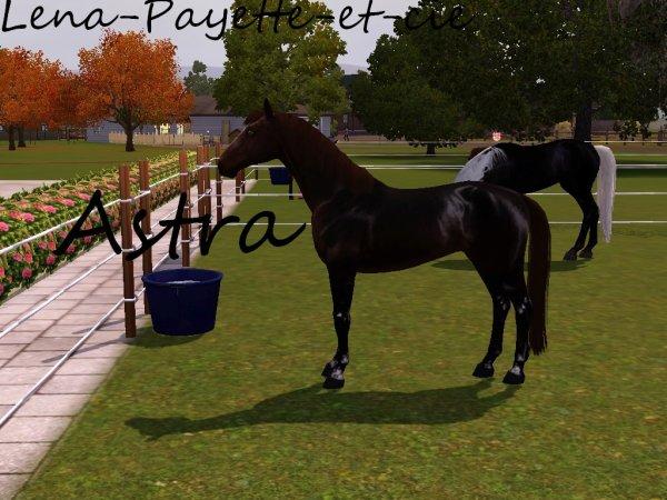 Présentation des chevaux et des personnages de l'histoire sims 3
