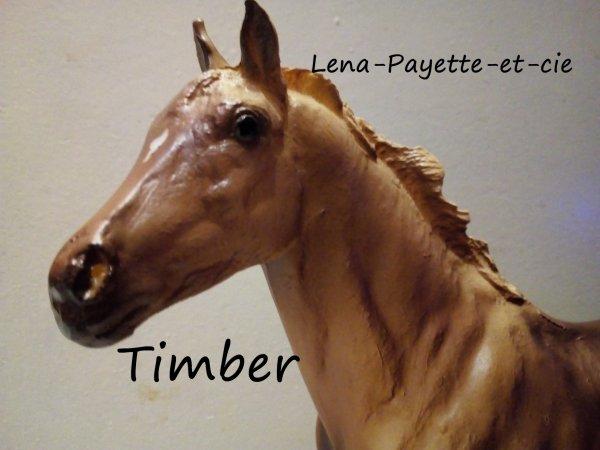 Présentation des chevaux: Timber