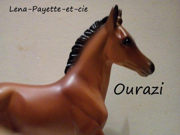Présentation des chevaux: Ourazi