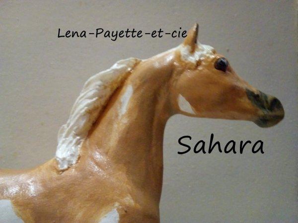 Présentation des chevaux: Sahara