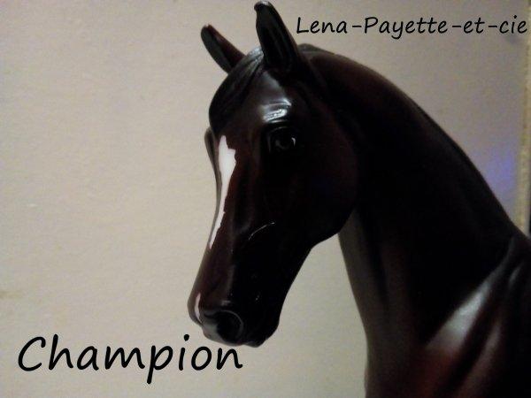 Présentation des chevaux: Champion