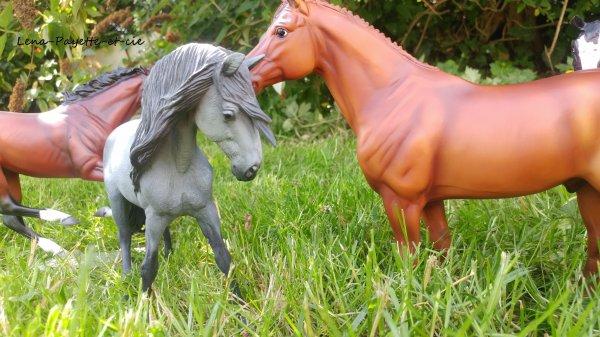 4 nouveaux chevaux !