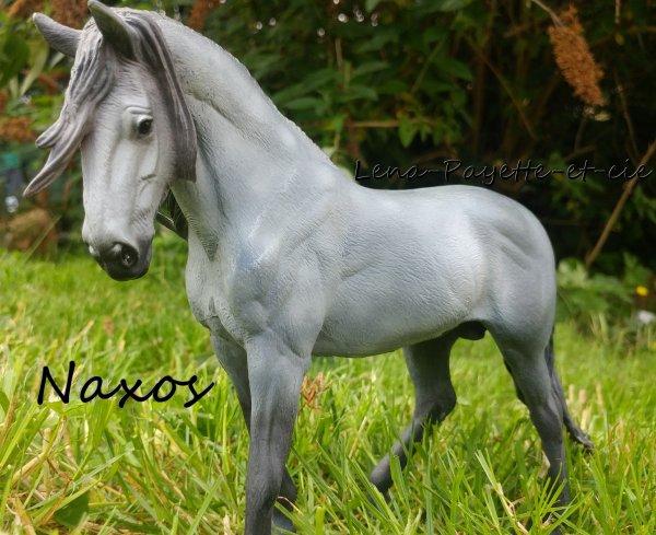 Présentation des chevaux: Naxos