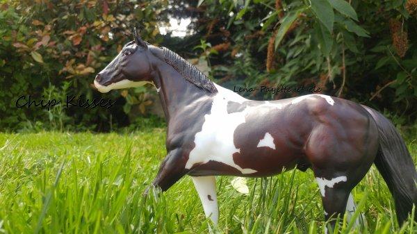Présentation des chevaux: Chip Kisses