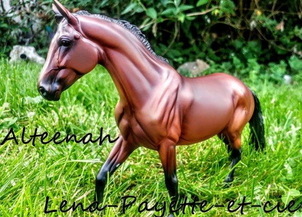 Présentation des chevaux: Alteenah