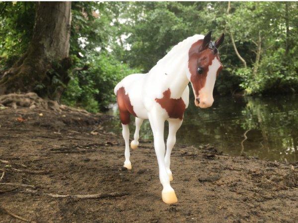 Présentation des chevaux: Smokla