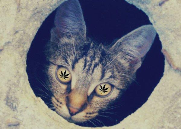 Mon chat ! ♥
