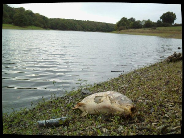 MACABRE DECOUVERTE AU LAC DU GRAON! (VENDEE)