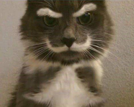 Le chat a moustaches restera à jamais avec nous... x)