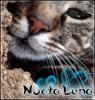 NoctaLuna