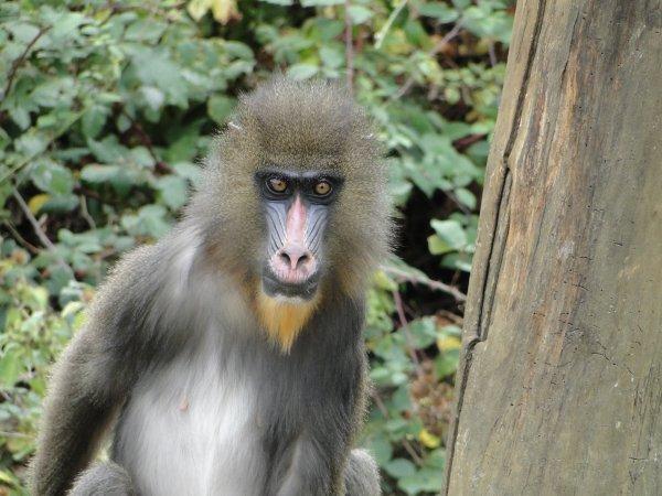 Découverte de Poitiers et ses environs 2012 : la vallée des singes