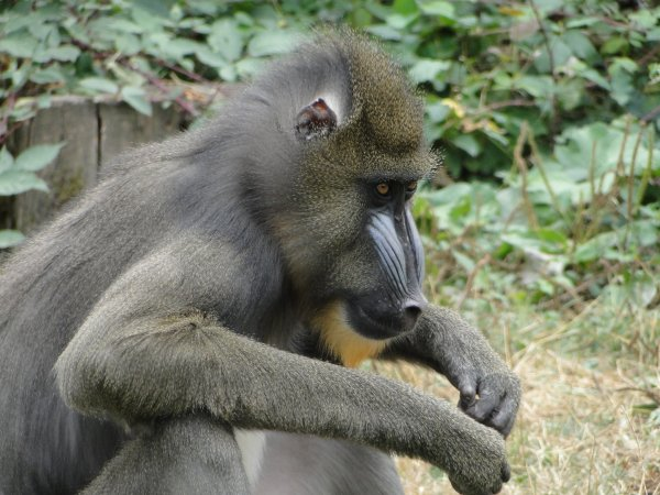 Découverte de Poitiers et ses environs 2012 : la vallée des singes 2