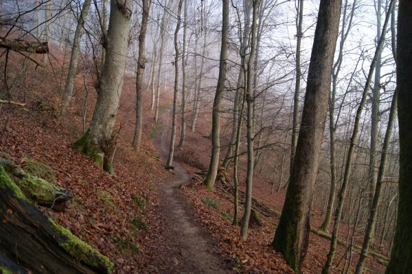 Luxembourg 2014 : Mullerthal, la petite suisse luxembourgeoise