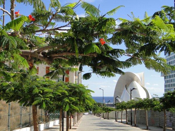 Iles Canaries : Tenerife - Visite El Medano, Santa Cruz, San Christobal et San Miguel