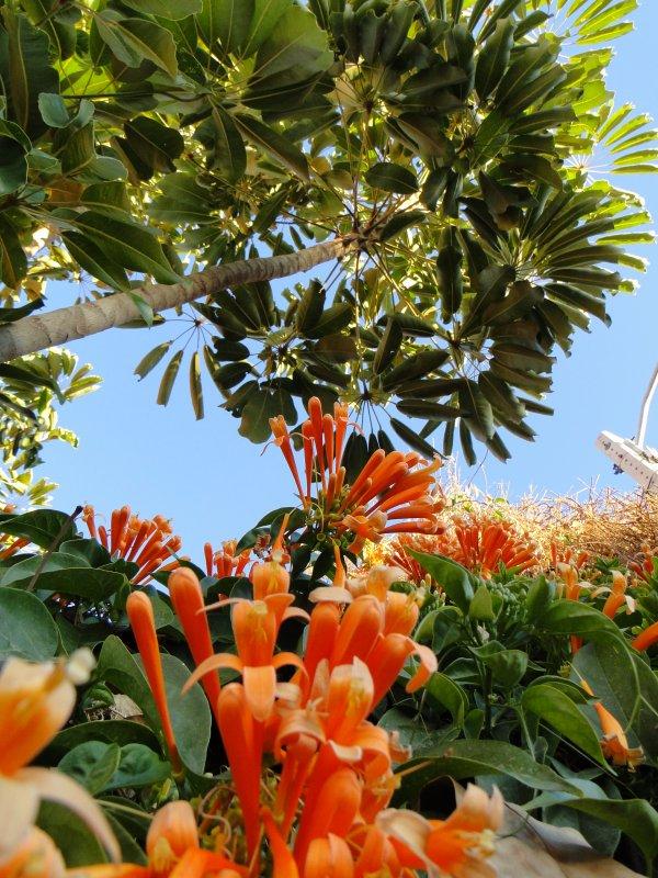 Le paradis de San Miguel vers les routes vertigineuse de Masca