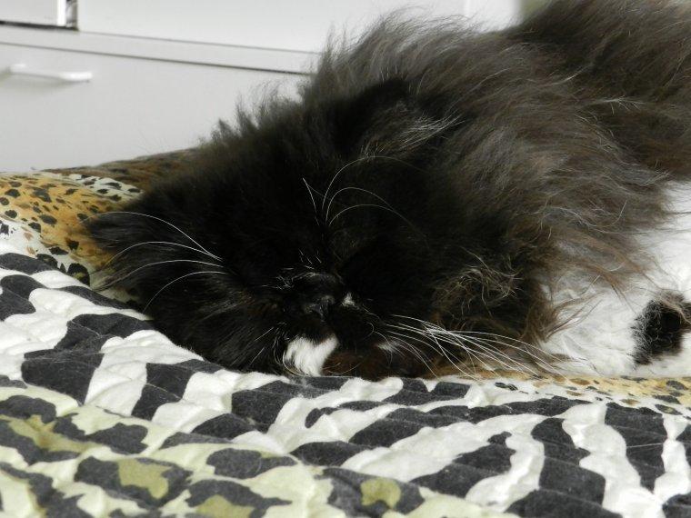 Gullivers 11 mois, chut il dort.....d'un oeil