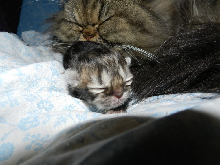 1er Bébé d'Anthéa et Gulliver